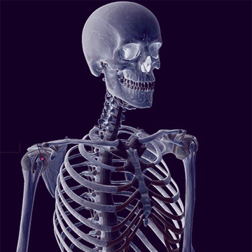 Mozgásrendszer - Csontok